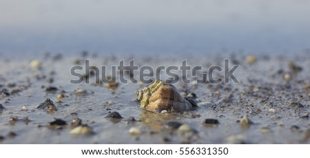 Seashell on beach Close-up. Marine background.