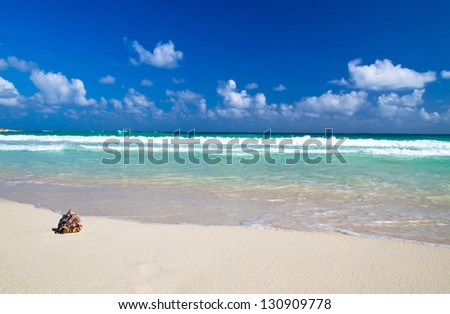 Seashell on beach ocean - stock photo