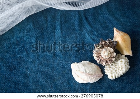 seashell on blue background with white curve mesh - stock photo