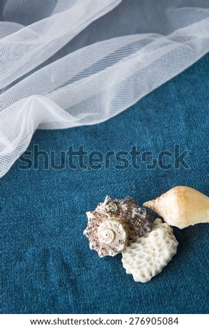 seashell on blue background with white mesh - stock photo