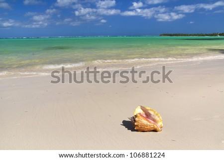 Seashell on caribbean beach, tropical trip - stock photo