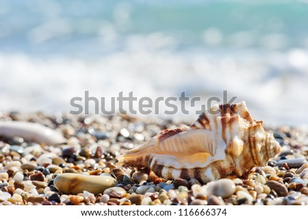 Seashell on sand and pebble beach by the sea. - stock photo
