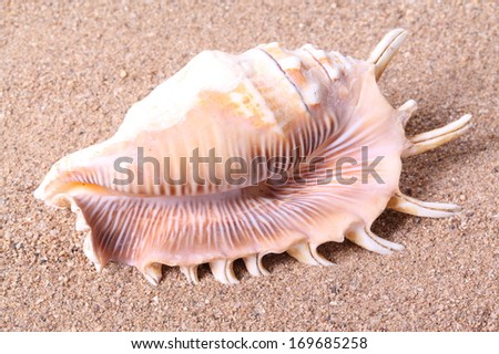 Seashell on sand background