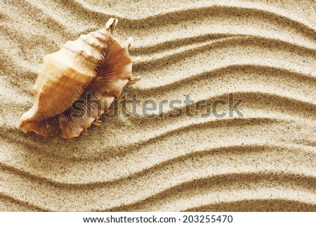 Seashell on sand./ Seashell on sand