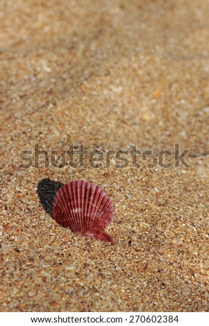 Seashell on the sand selected focus - stock photo