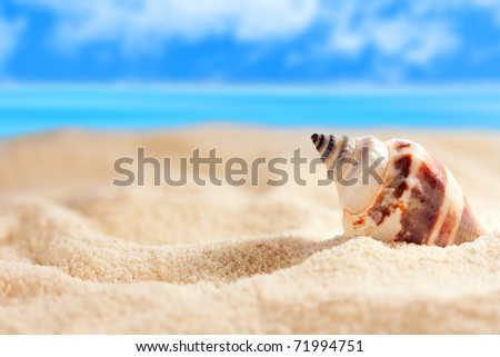 Seashell on the sandy beach - stock photo