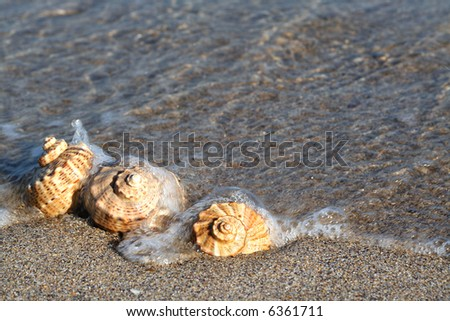 Seashell on the seashore with wave