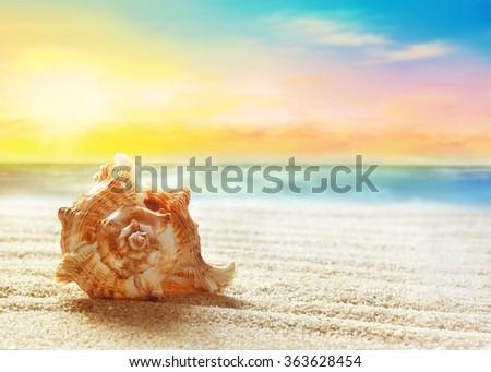 Seashell on the summer beach - stock photo