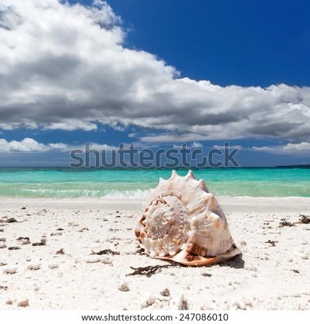 Seashell on tropical beach  - stock photo