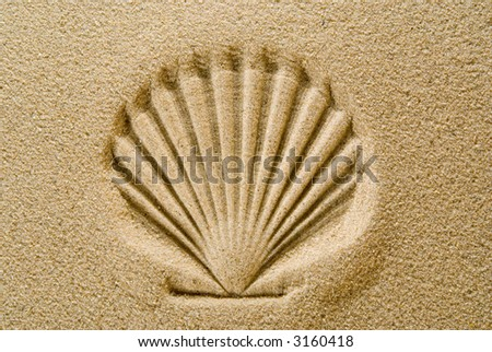 Seashell Pattern in Sand - stock photo