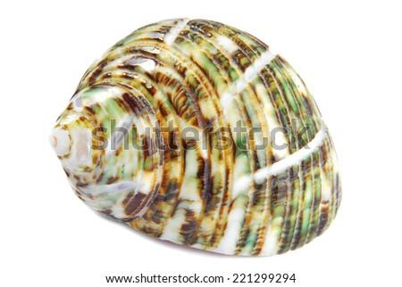seashell shell isolated on white background - stock photo