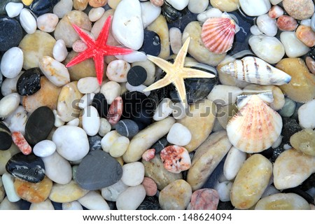 Seashell, starfish and colorful pebble stones in crystal clear water - stock photo