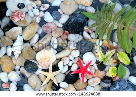 Seashell, starfish and pebbles in crystal clear water - stock photo