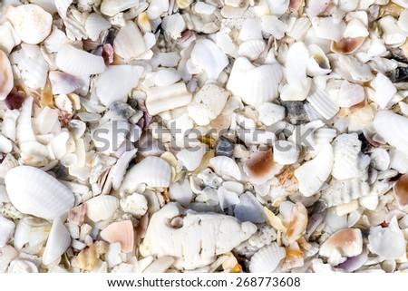 Seashell Texture - stock photo
