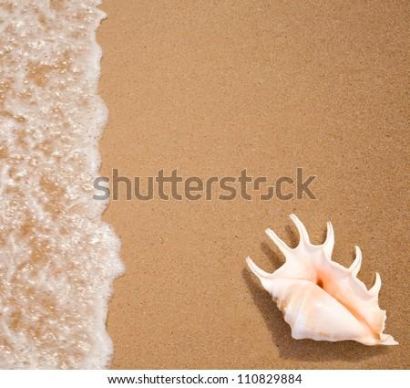 seashell top view on sea surf edge - stock photo