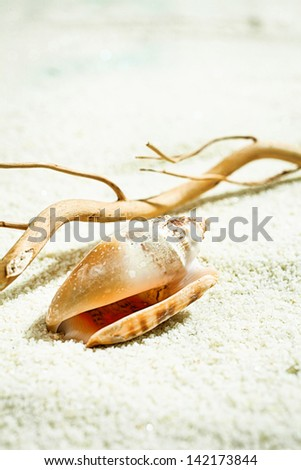 Seashell with drift wood left behind on the golden beach sand by the receding tide - stock photo