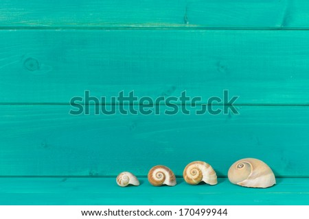 Seashells against a turquoise colored wood background - stock photo