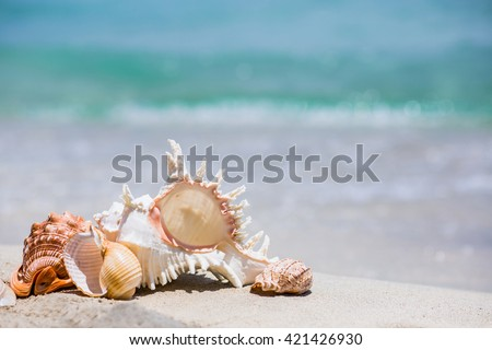 Seashells and sand background. Summer beach sea background.  - stock photo
