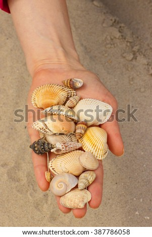 Seashells and scallop in hand of woman at the beach, summer time