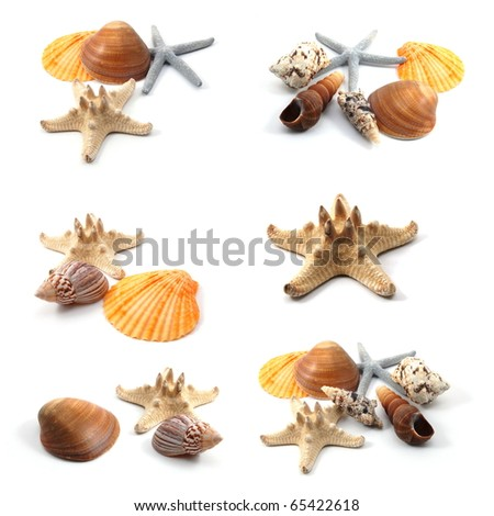 seashells and starfish collection isolated on white background - stock photo