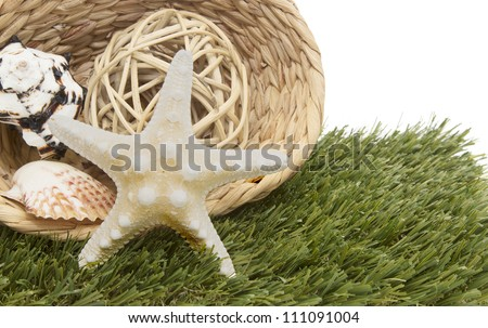 seashells and starfish in basket on green grass - stock photo