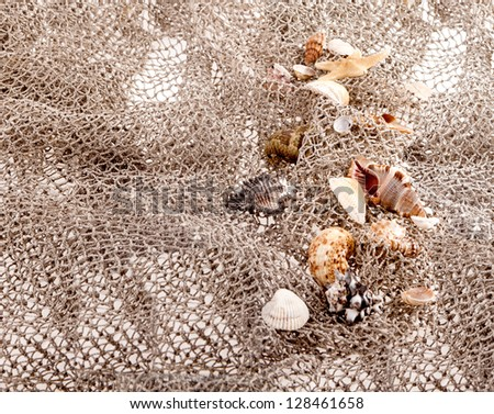 seashells and starfish on the fishing network on a white background