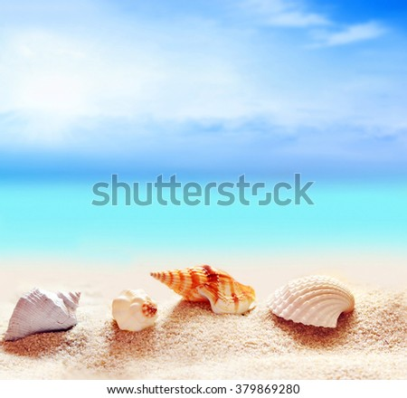 seashells and starfish on the sandy beach and palm at ocean background - stock photo