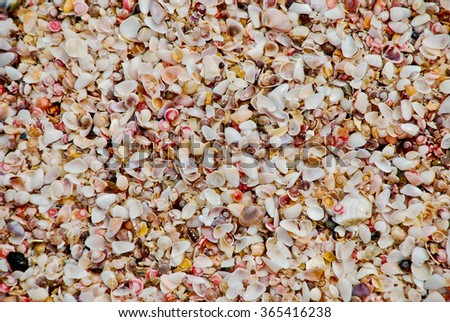 seashells, background
