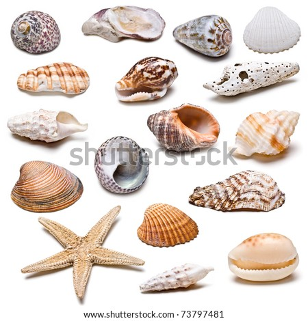 Seashells collection isolated on a white background. - stock photo