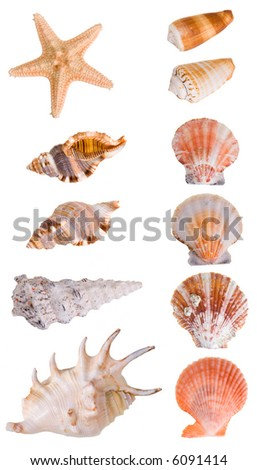 Seashells collection isolated on white background. Each element has a 8 Mp resolution - stock photo