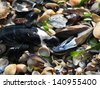 Seashells, mussels and seaweed background  - stock photo
