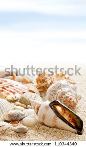 Seashells on a beach  as background - stock photo