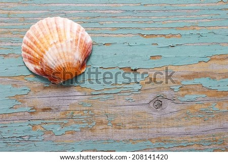 Seashells on a turquoise wooden background. Copy space - stock photo