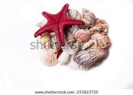 seashells on a white background - stock photo