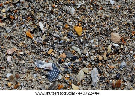 Seashells on beach sand - stock photo