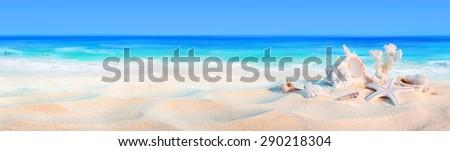 seashells on seashore - beach holiday background  - stock photo