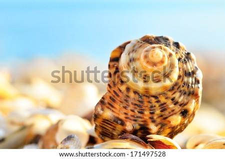 Seashells on the beach - stock photo
