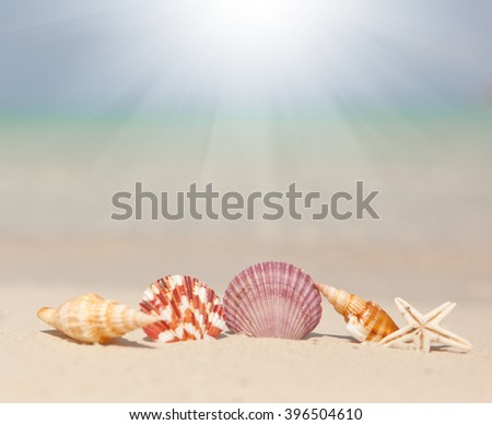 Seashells on the beach. Beautiful sea background. Vacation concept - stock photo