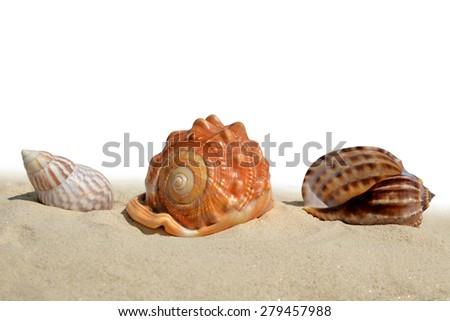 Seashells on the sand isolated on white background - stock photo