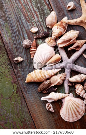 Seashells over wooden background - stock photo
