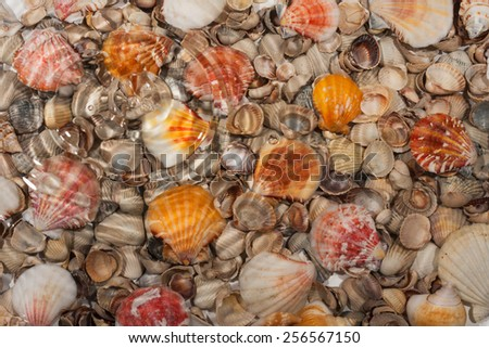 Seashells under water during rain, as background - stock photo