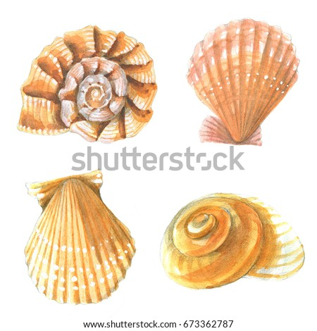 seashells watercolor