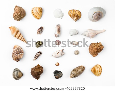 seashells, white background - stock photo