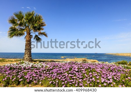 Seaside landscape with palm tree and pink and white flowers. - stock photo