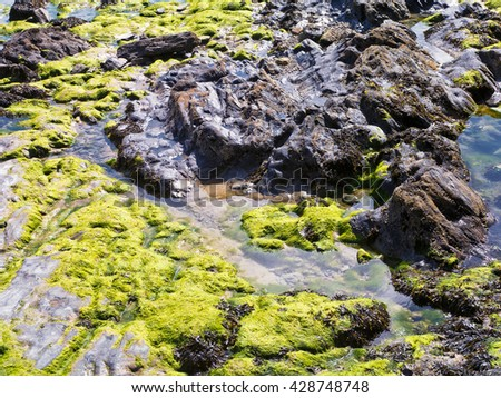 Seaside rock pools; rocks covered with seaweed  - stock photo