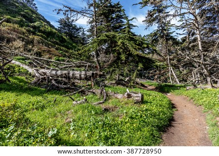 Seaside trails, where the North Shore Trail meets the Old Veteran Trail, with Cypress trees & blue sea at Point Lobos State Natural Reserve is ideal for hiking, walking, running, and biking - stock photo