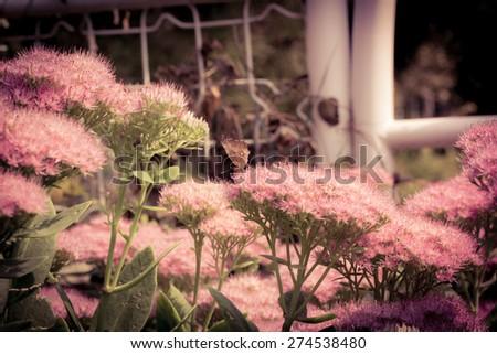 season in memory--flower - stock photo