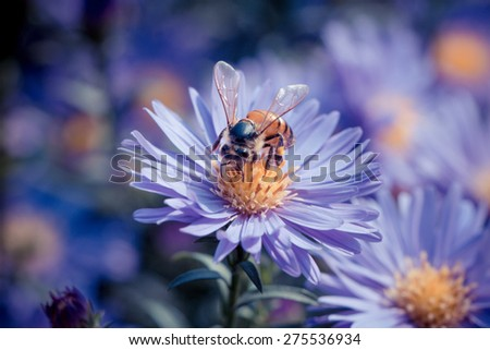 season in memory--flower and bee - stock photo