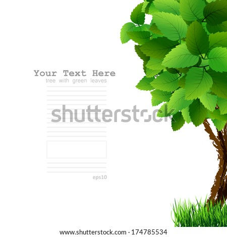 Season tree with green leaves. Green tree on white background. Spring tree with green leaves  - stock photo