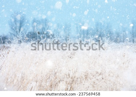Seasonal backgrounds with snowfall over the meadow